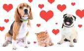 Cute pets on light background with hearts — Stock Photo