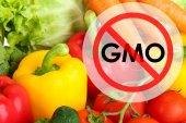Fresh vegetables without gmo — Stock Photo