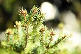 Beautiful fir-tree, outdoors — Stock Photo