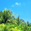 Palm leaves and blue sky on island in resort — Stock Photo #71793793