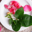 Beautiful pink roses in white plate on parchment, closeup — Stock Photo #71794915