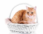 Red cat in wicker basket, isolated on white background — Stock Photo