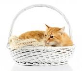 Gato vermelho na cesta de vime, isolado no fundo branco — Fotografia Stock