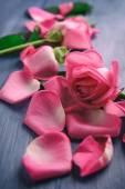 Krásné růžové okvětní lístky růží na barevný dřevěný stůl, detail — Stock fotografie