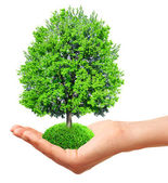 Hand holding a tree, isolated on white — Stock Photo