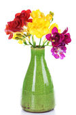 Beautiful freesia in vase isolated on white — Stock Photo
