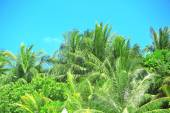 Palm leaves and blue sky — Stock Photo