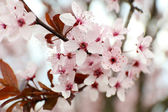 Branches of flowering tree — Stock Photo