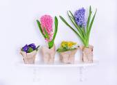 Flower on shelf on white wall background — Stock Photo