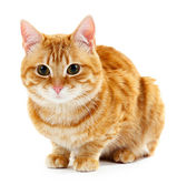 Portrait of red cat isolated on white — Stock Photo