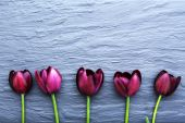Beautiful violet tulips on gray background — Stock Photo