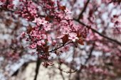 Blooming tree twigs — Stock Photo