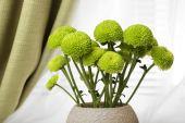 Beautiful chrysanthemum in pot on windowsill — Stock Photo
