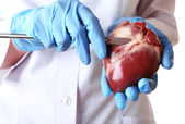 Doctor holding heart organ and scalpel close up — Stock Photo