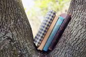 Böcker om träd, närbild — Stockfoto