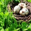 Nest with bird eggs over green bush background — Stock Photo #72766603
