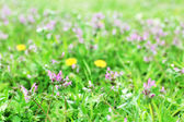 Wildflowers over green grass background — Zdjęcie stockowe