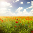 Poppies field against blue sky — Stock Photo #72778789