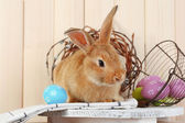 Cute red rabbit with Easter eggs on shelf on wooden wall background — Stock Photo