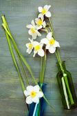 美丽的水仙花在花瓶木制背景中 — 图库照片