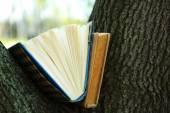 Books on tree, close-up — Stock Photo