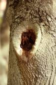 Tree hollow close-up — Zdjęcie stockowe