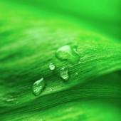 Foglia verde con gocce — Foto Stock