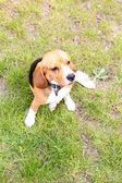 ładny pies w parku — Zdjęcie stockowe