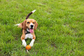 Cute dog in park — Stock Photo