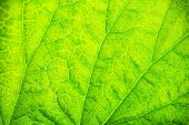 Close up of fresh green leaf with veins — Stock Photo