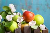 Fresh apples with apple blossom — Stock Photo