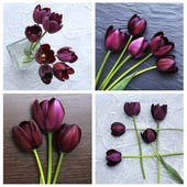 Collage of violet tulips — Stock Photo