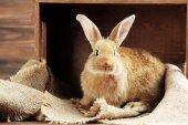 小兔子木制背景 — 图库照片