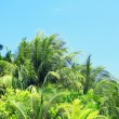 Palm leaves and blue sky on island in resort — Stock Photo #73393783