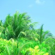 Palm leaves and blue sky on island in resort — Stock Photo #73393793
