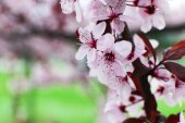 Branches of flowering tree, closeup — Stock Photo