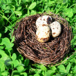 Nest with bird eggs over green bush background — Stock Photo #73480427