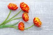 Beautiful bright tulips — Stock Photo