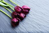 Beautiful violet tulips — Stock Photo