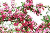 Gren av blommande träd, närbild — Stockfoto