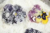 Candied sugared violet flowers, close-up — Stock Photo