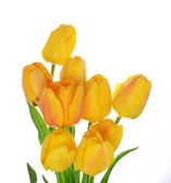 Beautiful bouquet of yellow tulips isolated on white — Stock Photo