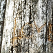 Word Love carved in tree close-up — Stock Photo #74206409
