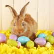 Cute red rabbit with Easter eggs on yellow fabric on wooden wall background — Stock Photo #74442599