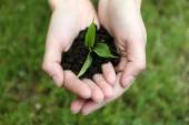 Green seedling growing from soil in hands outdoors — Stock Photo