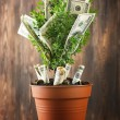 Decorative tree in pot with money on wooden background — Stock Photo #74450375