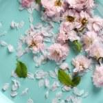 Schöne Blumen auf Platte hautnah — Stockfoto #74676261