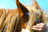Horse decorated with small blue flowers — Stock Photo