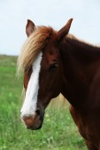 Portrait of beautiful brown horse — Stock Photo
