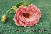 Beautiful eustoma flower on green background, greeting card — Stock Photo